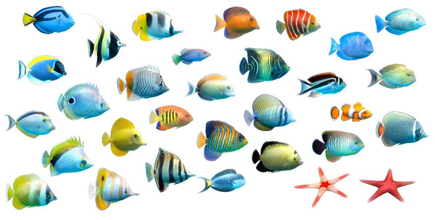 Sim Aquarium - Virtual Aquarium, Screensaver and Live Wallpaper
